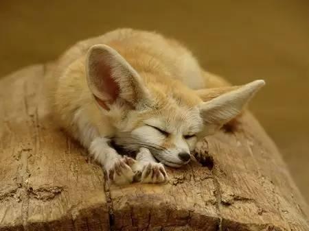 """狐狸图片,10种最美的狐狸 """"狐狸精""""说肯定就是她们!"""
