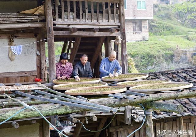 茶怎么做,高山野生茶手工制作的全过程