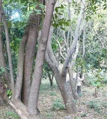 怎么做木,假沉香的制作全过程!沉香爱好者必看!(一)