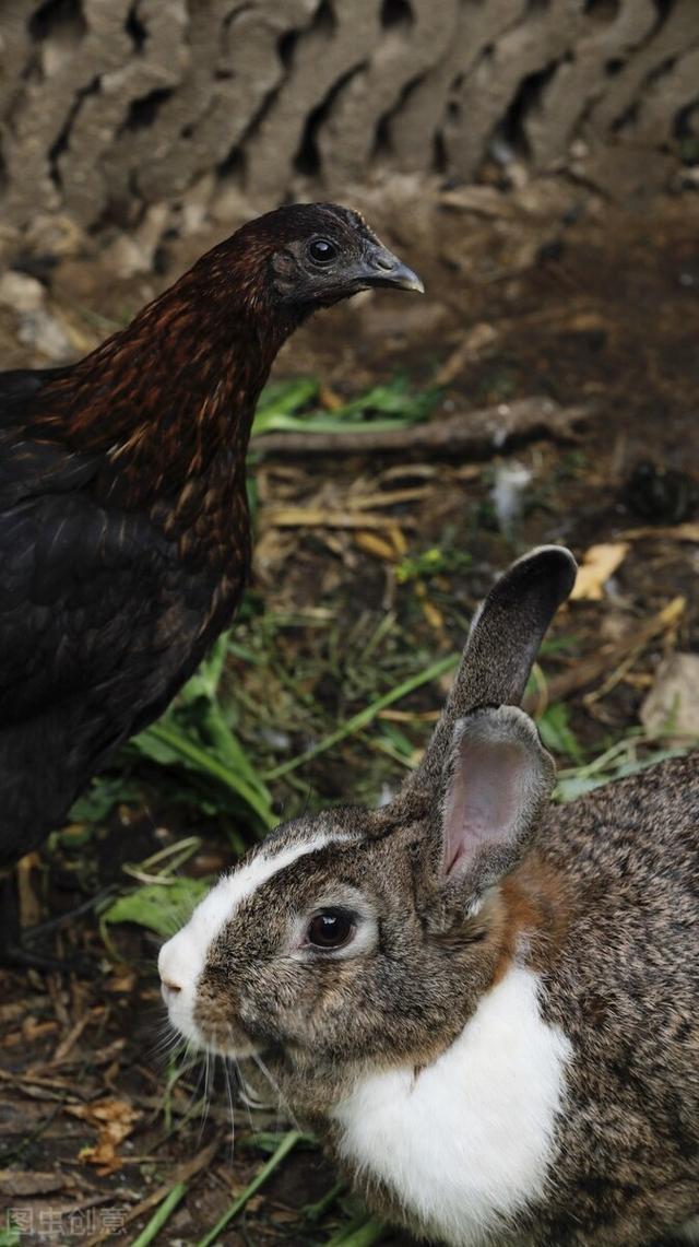 《鸡兔同笼问题》五种方法精讲,小学生一看就懂,妙不可言