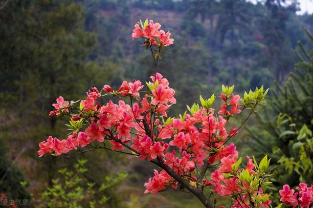 这些不起眼的野生植物,种在花盆里就是美美的盆栽和盆景
