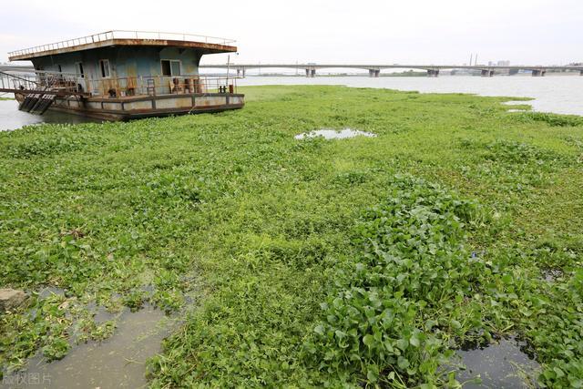 水生植物有哪些,什么是水生植物?水生植物还有你不知道的分类?