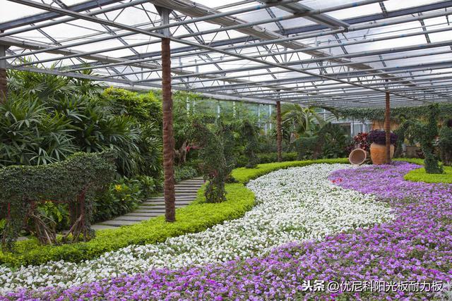 温室花卉,温室大棚种盆栽技巧来了,学会这些花卉养殖很简单