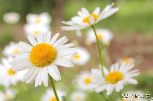 春天的句子,春天小清新句子,句句唯美