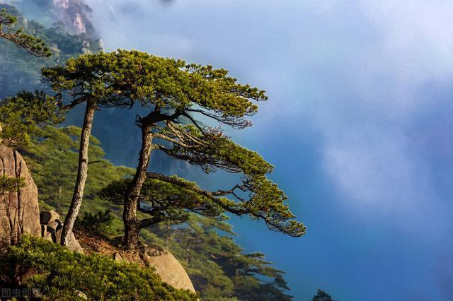 松树的诗,腹有诗书气自华,飞花令里读诗词——100句(松)篇