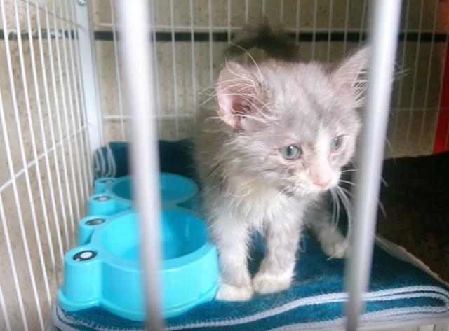 別人要安樂的貓,被我撿了回來,8個月後,這顏值不虧 家有萌寵 第4张