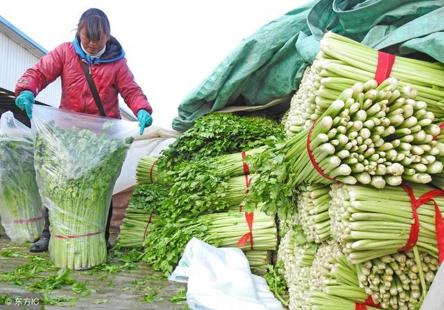 农产品市场营销,我国农产品营销渠道的分析及建议