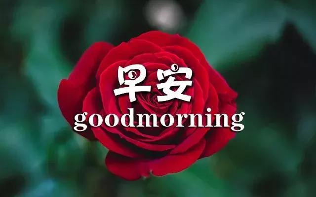 周一祝福语,美好的一周从星期一开始,愿你好人一生平安!祝周一快乐!