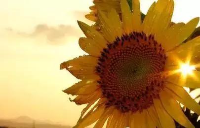 英文好句,生活需要热情,10句特别阳光的英语句子