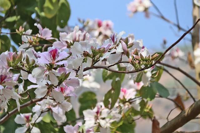 小白花的做法,赏心悦目 更是盘中美餐!来看看云南这种花有几种吃法