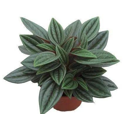 """0种常见的室内盆栽绿化植物"""""""