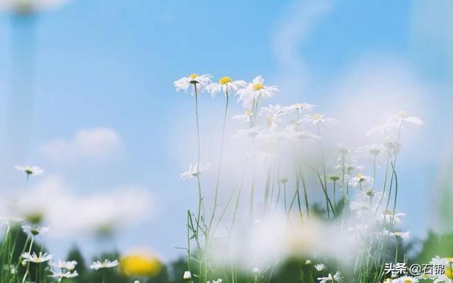 阳光的诗,七首豁达诗词:心有阳光,生活便无限灿烂!