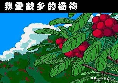 杨梅短句,《我爱故乡的杨梅》句子仿写,坚持天天练,作文就不难