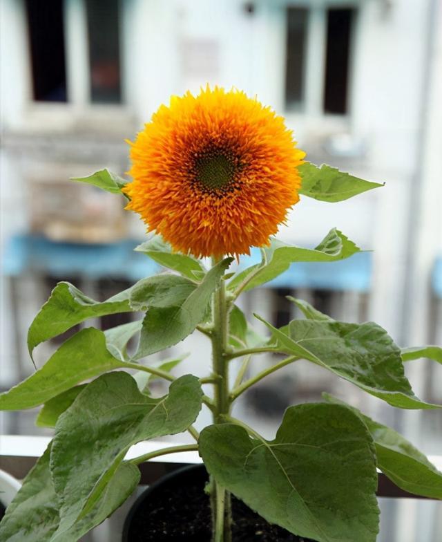 这5种稀有的植物,不光名字有趣,造型更有意思
