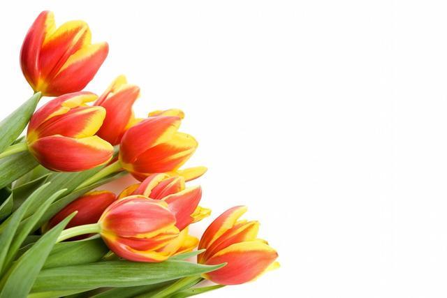 父母的诗,母亲节一定要读的十报父母恩,佛家的偈颂诗,献给天下父母