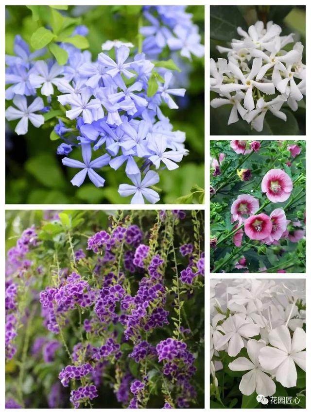 夏天的花有哪些,盘点下那些在夏天盛开的植物