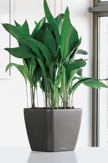 扒一扒室内常见的高颜值植物