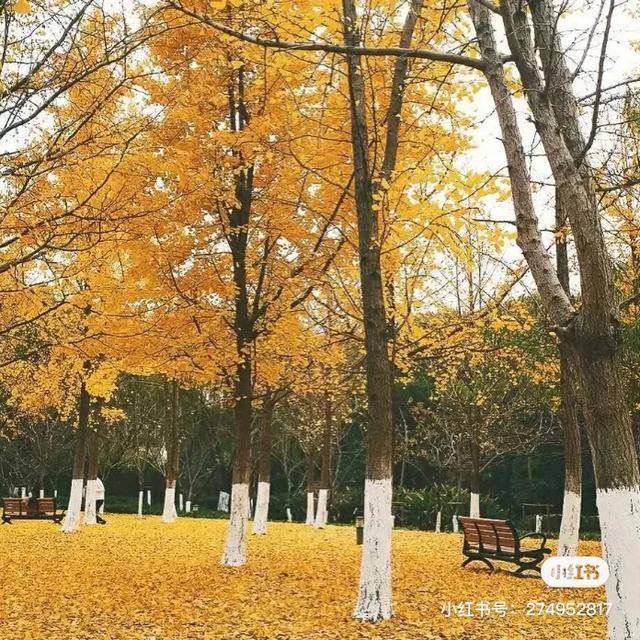 秋天的短句子,超适合秋天的文案哟~