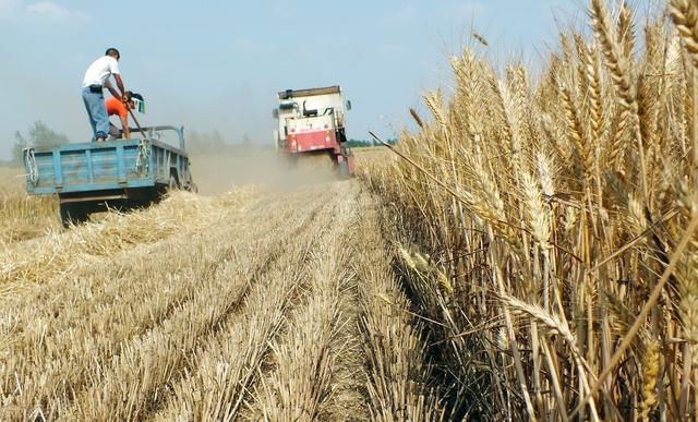 2014年4月12日小麦价格行情