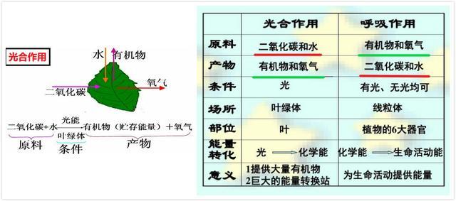 光合作用的意义,高中地理——每日讲1题(光合/呼吸作用、大气的受热、全球变暖)