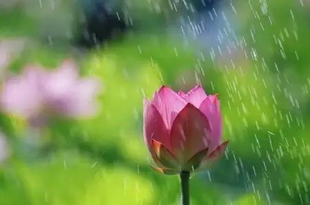 感恩老师的短句,感恩词 感恩天地阳光雨露滋养万物