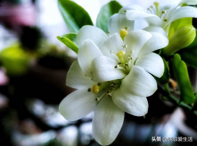 """银杏叶寓意,常见的4种花,却能养成""""传家宝"""",看看你养了吗?"""