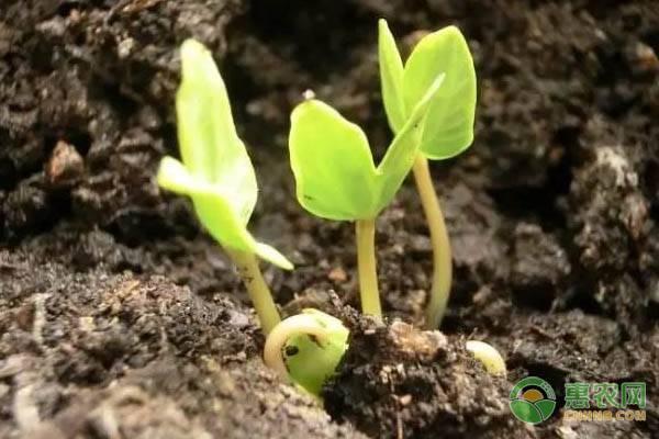 植物传播种子的方法有哪些,花草种子价格多少钱一斤?都有哪些传播种子的方法?