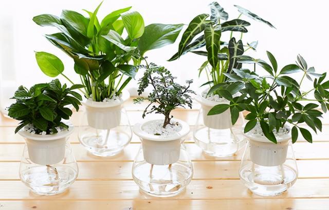 花养不好都是浇水浇死的,家庭花卉分三类,它们浇水方式都不一样
