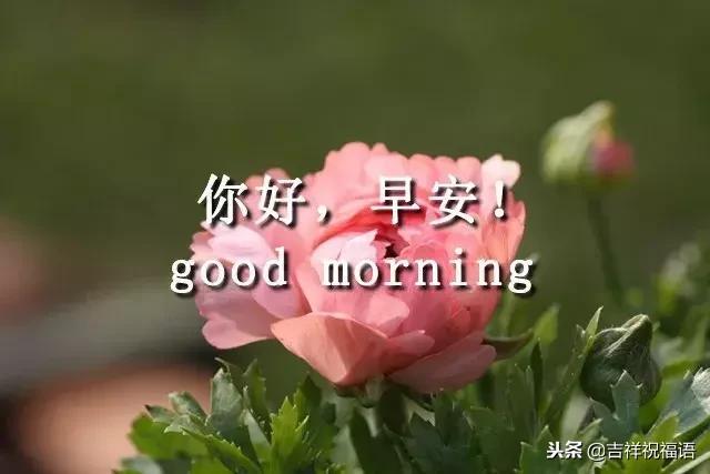 工作祝福语,12.26,早安,祝你今天好心情,工作顺利,生活甜美!