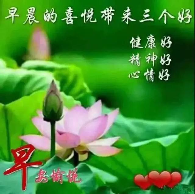 鲜花祝福语,春暖花开鲜花早安图片带字推荐,早上好问候语图片
