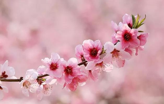 珍惜的短句,人生大彻大悟的短句:珍惜现在拥有的,努力去营造明天更美的生活