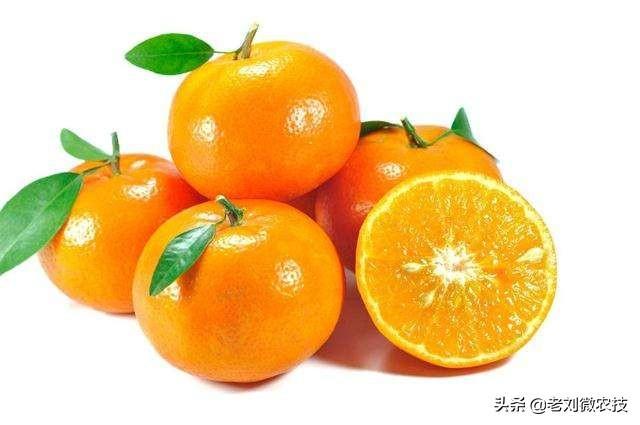 橘子品种,柑橘品种繁多,各具特色,现在给你介绍中国最好吃的几种柑橘