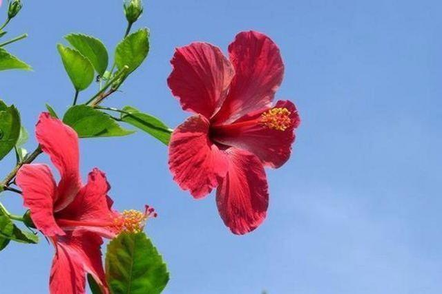 """花卉摆放,家里养花,原来摆放位置有""""说法"""",这些位置别摆放"""