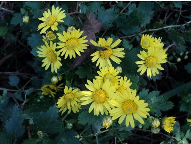 描写菊花的句子,关于花草的唯美句子和照片