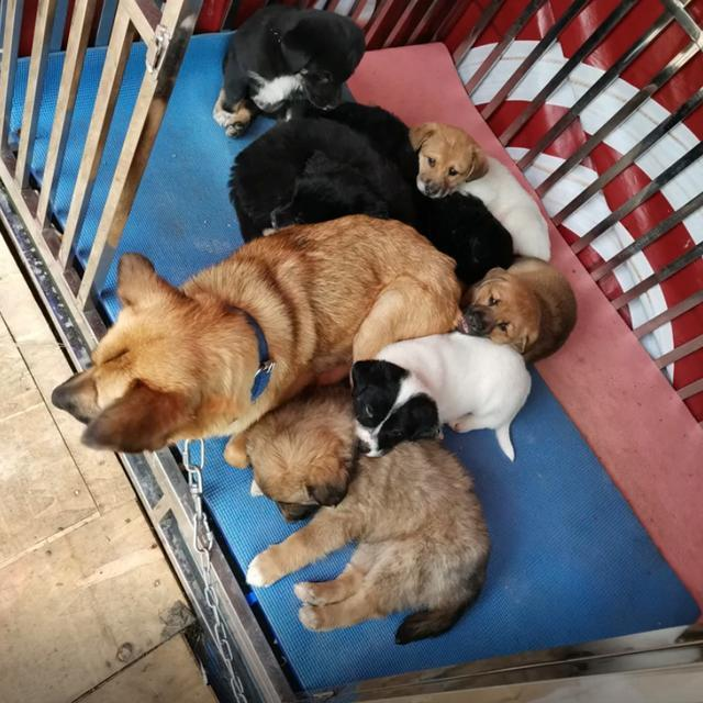 4隻流浪狗入職阿里,如今一年過去了,它們怎麼樣了? 家有萌寵 第5张