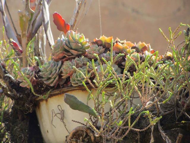 """种濒危植物,野外遇到了不要随意挖,一起看看都有哪些"""""""