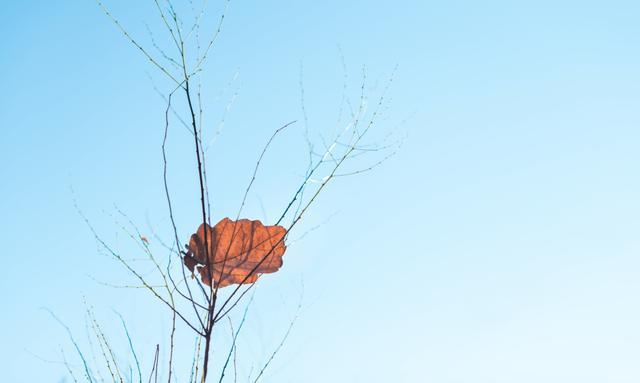 50句好句,《唐诗三百首》中的50句对偶名句,如诗如画,汉语真的太美了