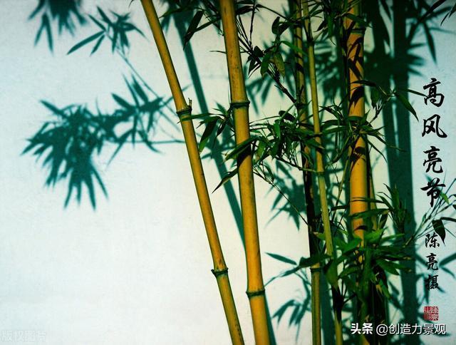 """竹子的象征意义,俗话说""""无园不竹"""",那么庭院为什么要种竹子呢?风水上有讲究"""