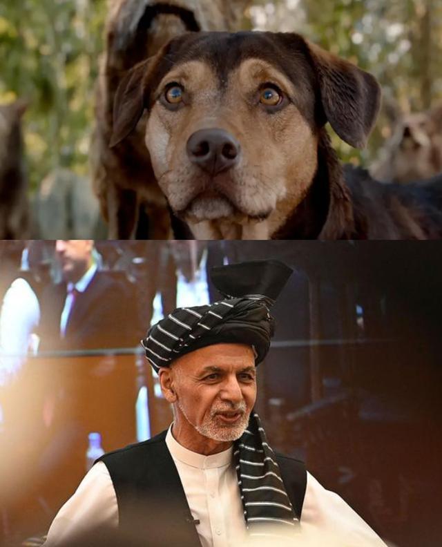 CCTV6播放《一条狗的回家路》