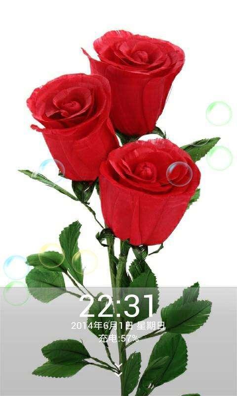 好看图片,壁纸和头像,耀眼绚丽的玫瑰花,美丽漂亮极了!