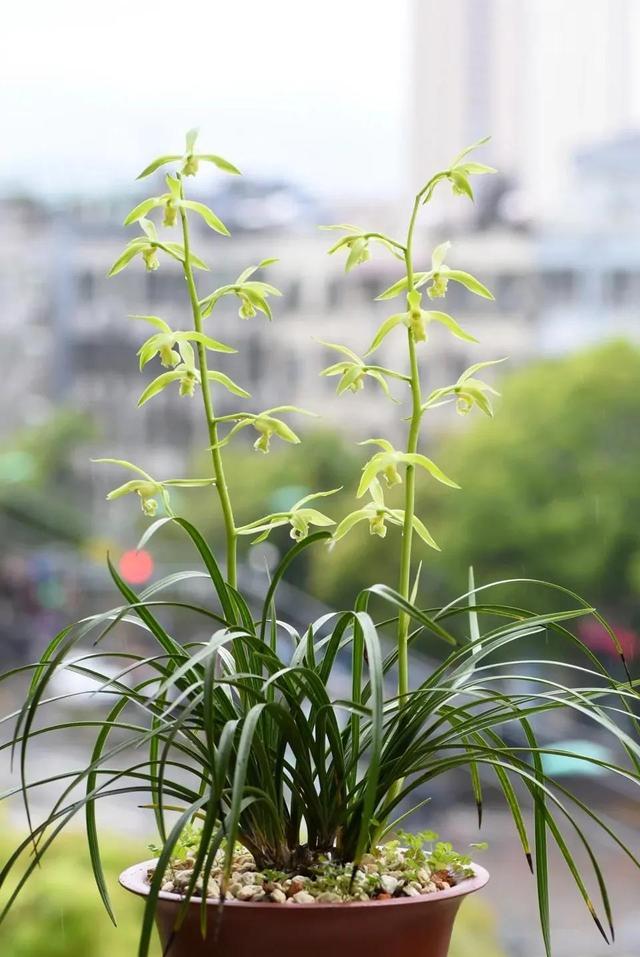 """富贵大气人家都爱养的""""10种花"""",君子兰、虎皮兰等普通花都上榜"""
