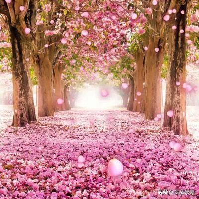 写花的一段话,养花的人,心情平和,耐住寂寞,自信把握,事业有果,幸福颇多