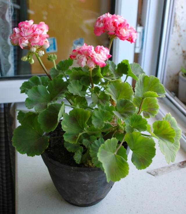 的花卉,这5种花的养护方法,日照水肥处理好,花就长得好