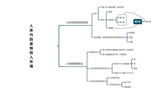 「开学预习七年级下」生物知识网络第11章-第13章