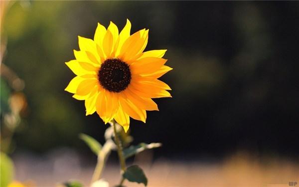发朋友圈早安的句子,很有文采的早安说说,精致走心,忍不住分享到朋友圈!
