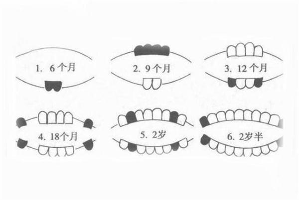 婴儿 长牙,宝宝长牙顺序和时间知道吗?一口整齐的牙齿,要注意什么?