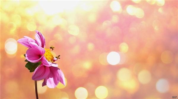 清晨的阳光唯美句子,早安励志阳光语录,唯美走心,送给追梦路上的你