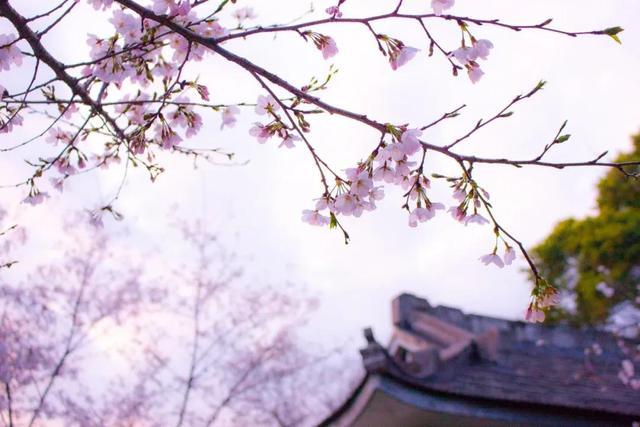 看花的诗,春天 | 26句怦然心动的桃花诗词,邀你一起云赏花!