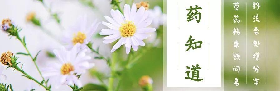 藏红花的吃法,药知道 | 活血化瘀、凉血解毒——藏红花