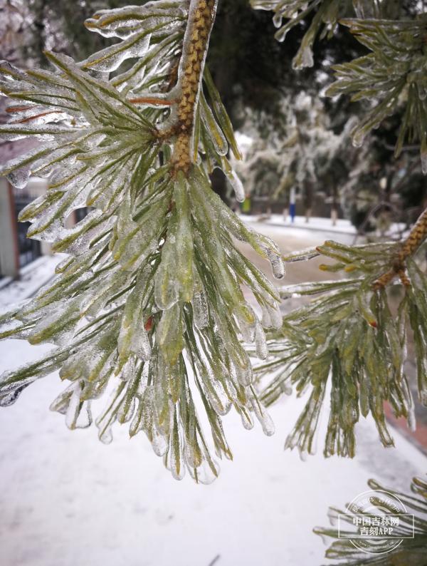冻雨形成的条件,雨雪速报丨专家解读:冻雨危害大 防御需注意